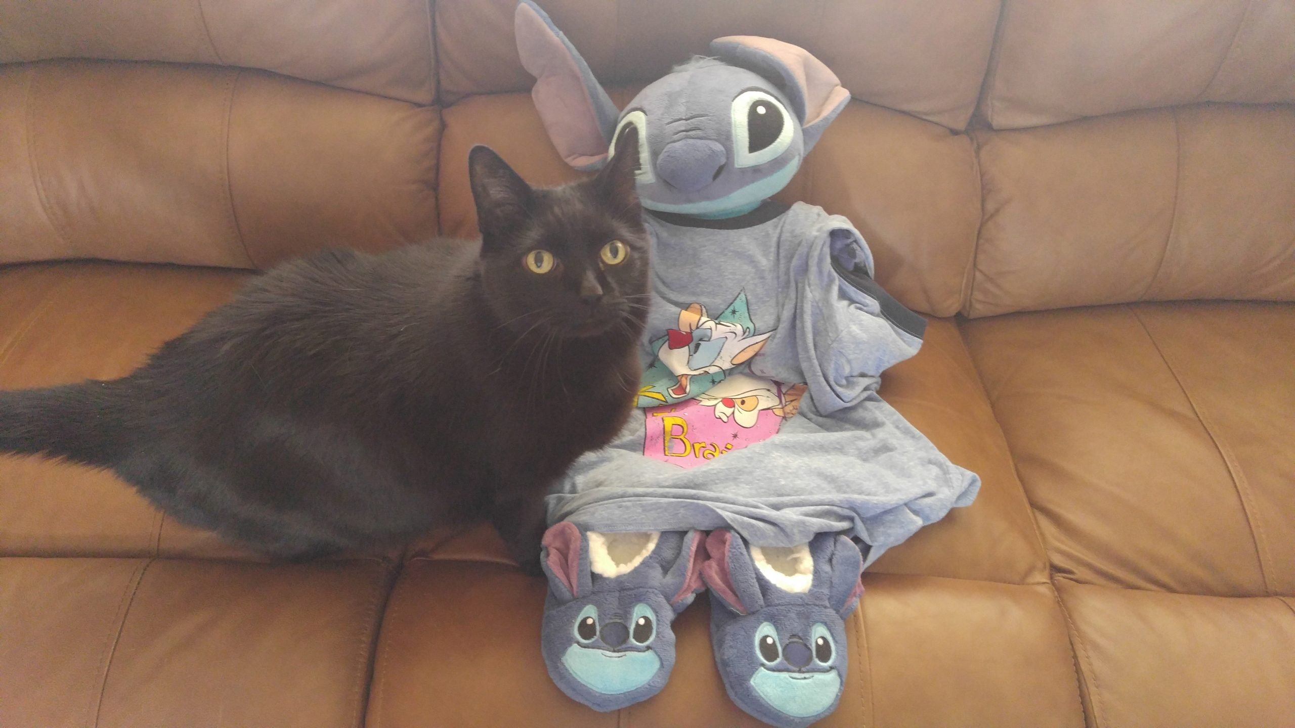 Low Maintenance Pets image of Eddie the cat and Stitch
